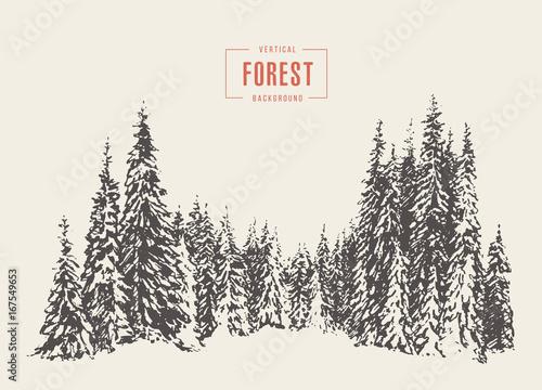 Sosna lasu ilustracji wektorowych ręcznie rysowane, szkic