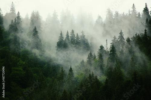 Mglisty krajobraz z jodłowego lasu w stylu retro vintage hipster