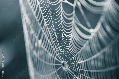 Fotografia A beautiful closeup of a spider web in marsh