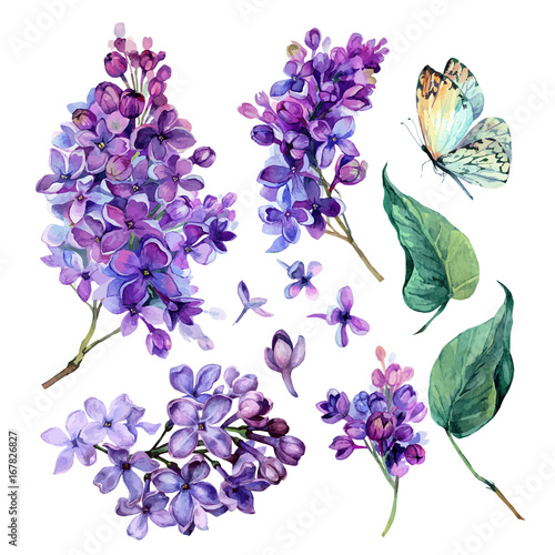Valokuva watercolor Collection of Purple Lilac.