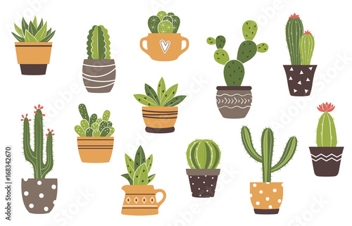 Fotografie, Obraz Vector hand drawn isolated cactus and succulents set