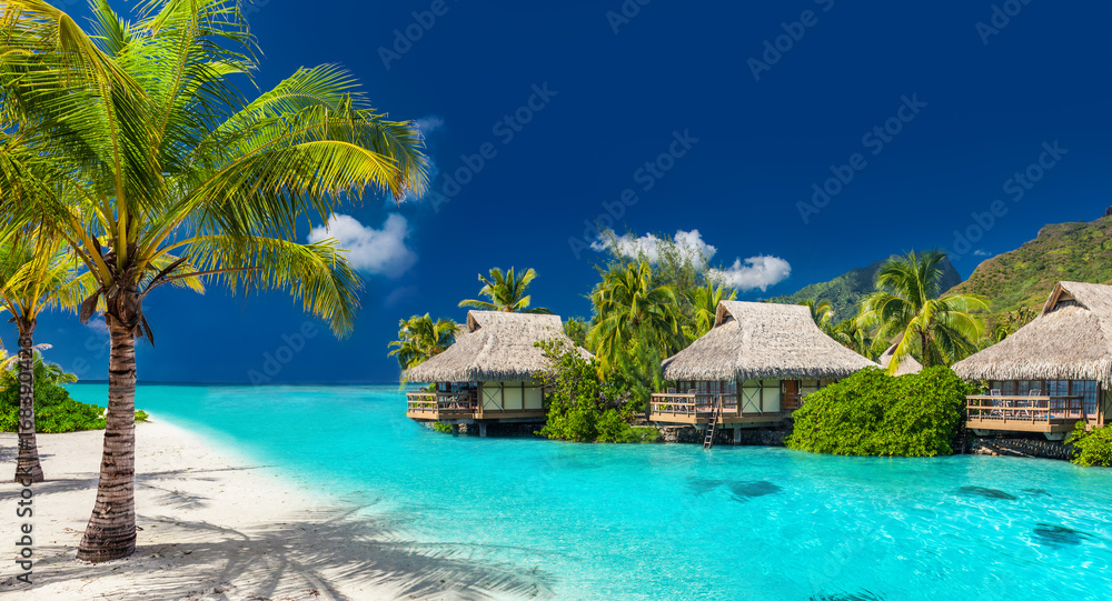Holiday location on a tropical island with palm trees and amazing vibrant beach - obrazy, fototapety, plakaty