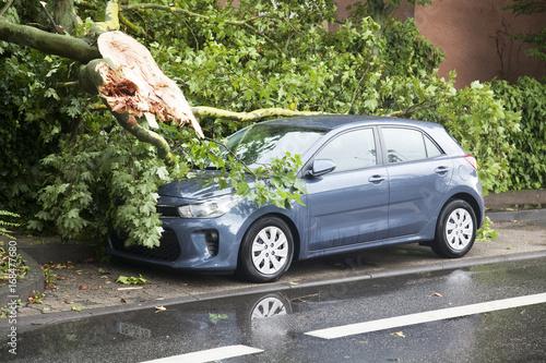 Abgebrochener Ast beschädigt geparktes Auto Fototapeta