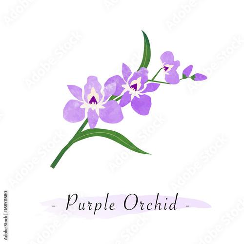 Wallpaper Mural Colorful watercolor texture vector botanic garden flower purple orchid