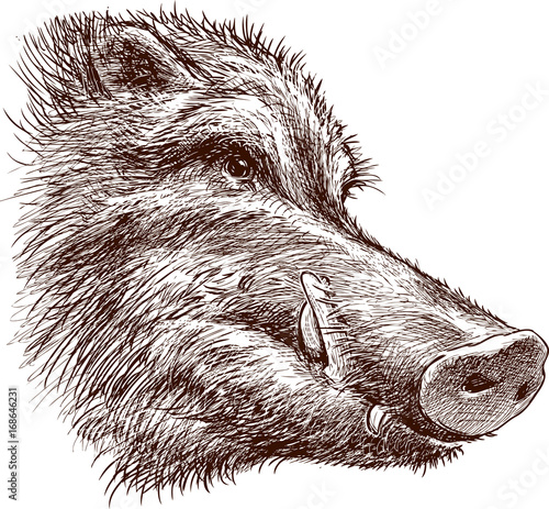 Stampa su Tela Muzzle of a wild boar