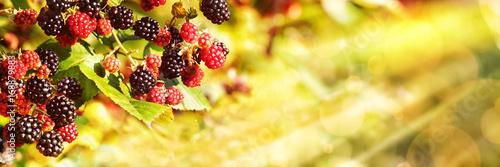 Fotomural Blackberries, Late Summer Background