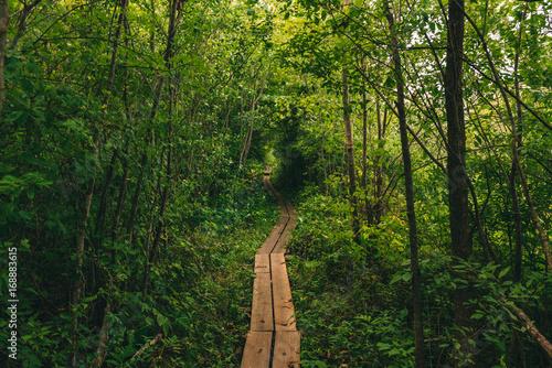 Photo appalachian trail