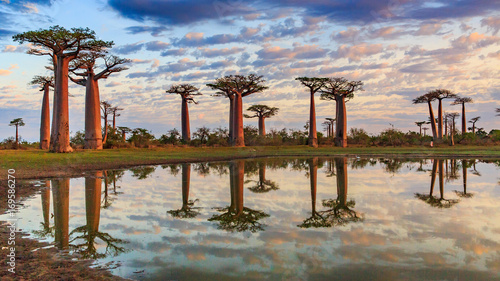 Canvas Print Beautiful Baobab trees at sunset at the avenue of the baobabs in Madagascar