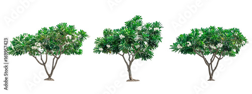 Stampa su Tela Collection of green trees isolated on white background for use in architectural design or decoration work
