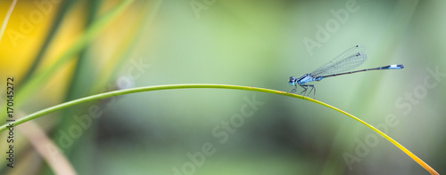 Libellenpanorama