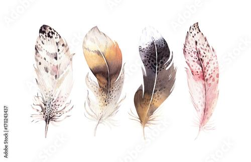Fototapeta premium Ręcznie rysowane akwarele wibrujący zestaw piór. Skrzydła w stylu Boho. ilustracja na białym tle. Projekt mucha ptak na koszulkę, zaproszenie, kartkę ślubną. Rustykalna dekoracja Sowa