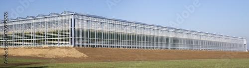Obraz na płótnie Agriculture tomato greenhouse