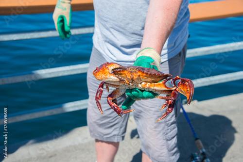 Red Rock Crab in Man's Hand on Fishing Pier, Olympic Beach, Edmonds, Washington