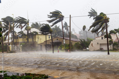 Fototapeta Flooded Las Olas Blvd and Palm trees blowing in the winds, catastrophic hurricane Irma