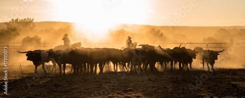 Fotografia, Obraz Mustering, Kimberley, Western Australia