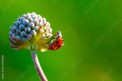 A ladybug on the flower.