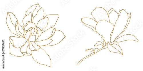 Obraz na plátně Set of golden graphical magnolia flower. Vector.