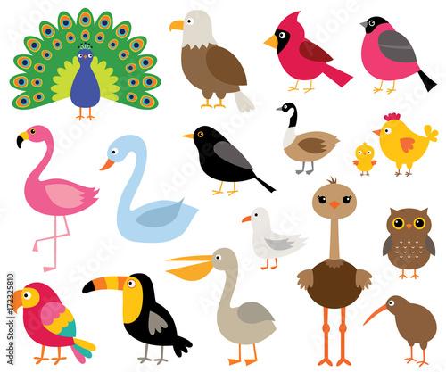 Fototapeta premium Kreskówka ptaki, zestaw ilustracji na białym tle