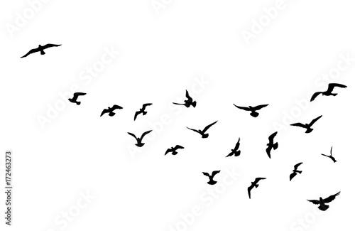Fototapeta premium Stado ptaków latające na tle błękitnego nieba. Dzika przyroda.