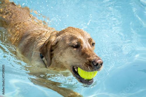 Fotografia, Obraz Dogs playing in swimming pool