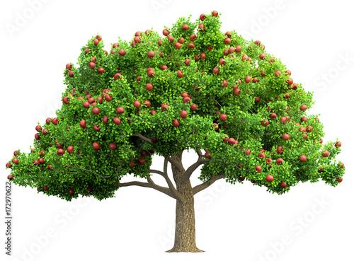 Fotografia, Obraz red apple tree isolated 3D illustration