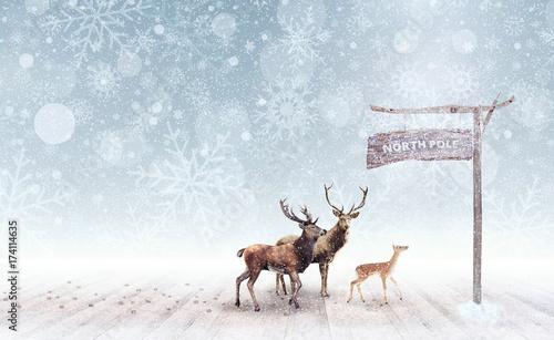 Stampa su Tela Deer arriving at the north pole 3D Rendering