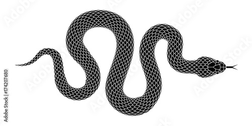Vector snake silhouette isolated on a white background.