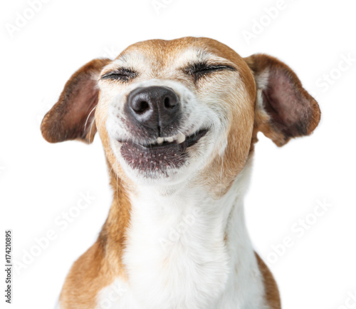 Funny dog disgust, denial, disagreement face. Don't like that. grins  teeth pet. White background