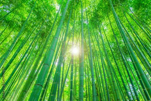京都 竹林