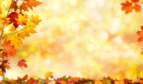 Fototapeta premium jesień tło z liśćmi klonu