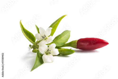 chili peppers whit flowers Fototapete