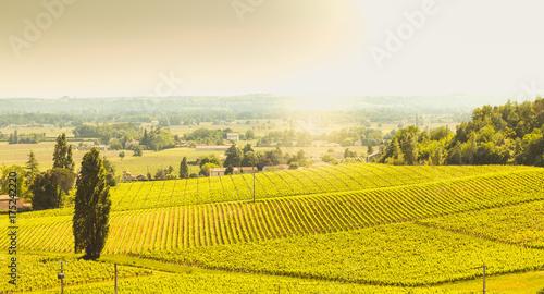 Fotografie, Tablou vineyard of Saint-Emilion, France, near Bordeaux at the end of spring 2017