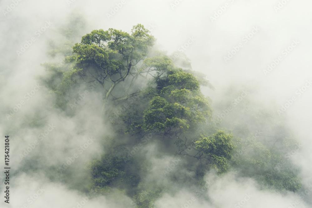 Fototapeta premium Las tropikalny we mgle w Japonii, vintage