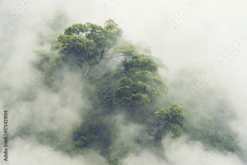 Obraz premium Las tropikalny we mgle w Japonii, vintage