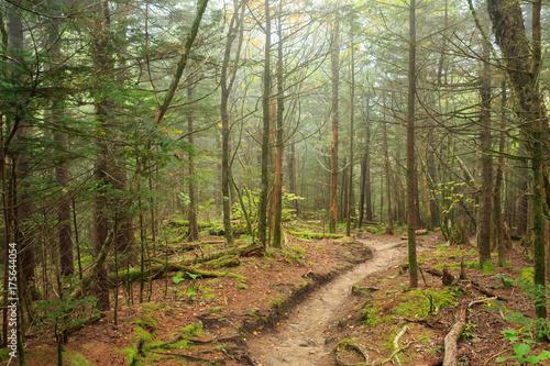 Fényképezés A trail winds through Great Smoky Mountains National Park