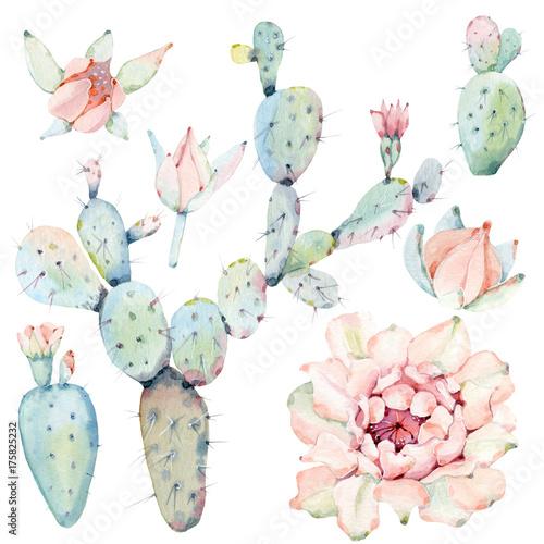 Hand drawn watercolor saguaro cactuses