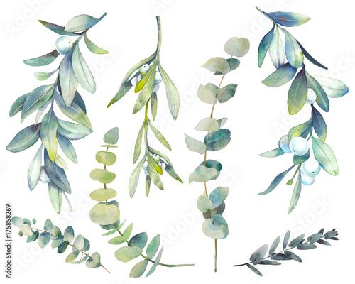 Stampa su Tela Watercolor winter plants set