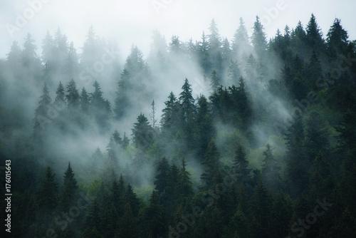 Naklejki na meble Mglisty krajobraz Jodłowego lasu w stylu retro