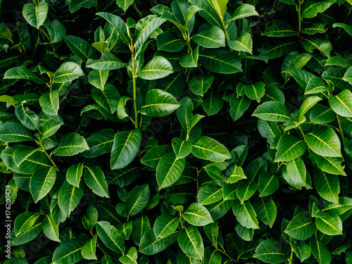 Flat lay Nature background of green leaves.