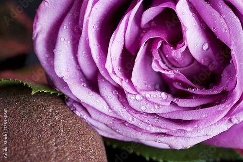 spa de rosas sobre piedra mojada