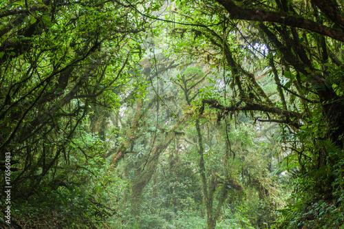 Cloud forest of Reserva Biologica Bosque Nuboso Monteverde, Costa Rica