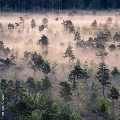 Fototapeta premium Ranek mgła i wschód słońca w Torronsuo parku narodowym, Finlandia