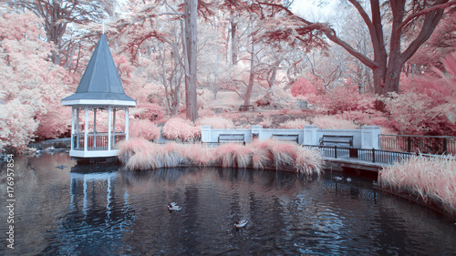 The Duck Pond at the Wellington Botanical gardens New Zealand
