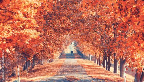 Photo prachtvolle Herbstallee
