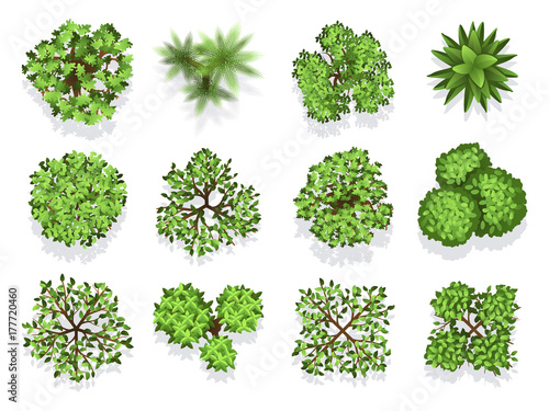 Photo Top view tree collection - green foliage isolated on white background