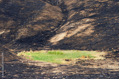 Hillside charred by the wild fire that raged through Napa and Sonoma counties in California, fence along left side and a small patch of green grass spared from the inferno