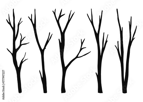 Wallpaper Mural twigs from the tree are dry isolated