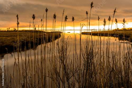 Wallpaper Mural Sea marsh at twilight