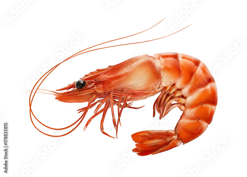 Red boiled prawn or tiger shrimp isolated on white background