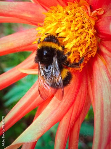 Valokuva Bee on a vibrant flower